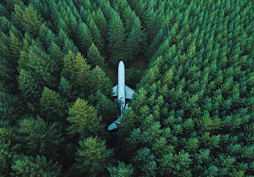 Letadlo v lese